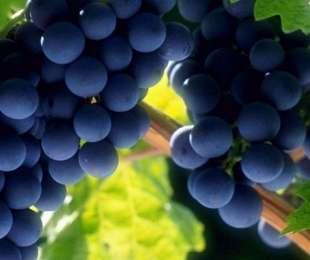 Узбекистан начал экспортировать вина в Японию